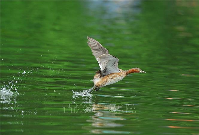 Chèo thuyền ngắm chim Le Le