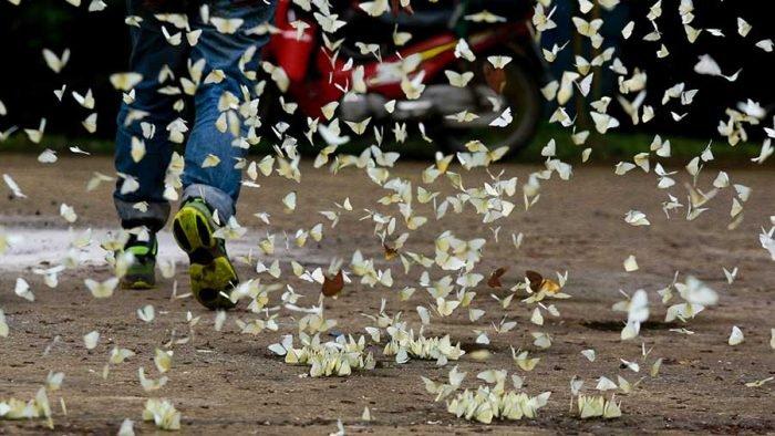 Mùa bướm