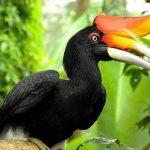 danviet Đẹp huyền hoặc loài chim quý có tên Phượng Hoàng Đất ở Tràng An