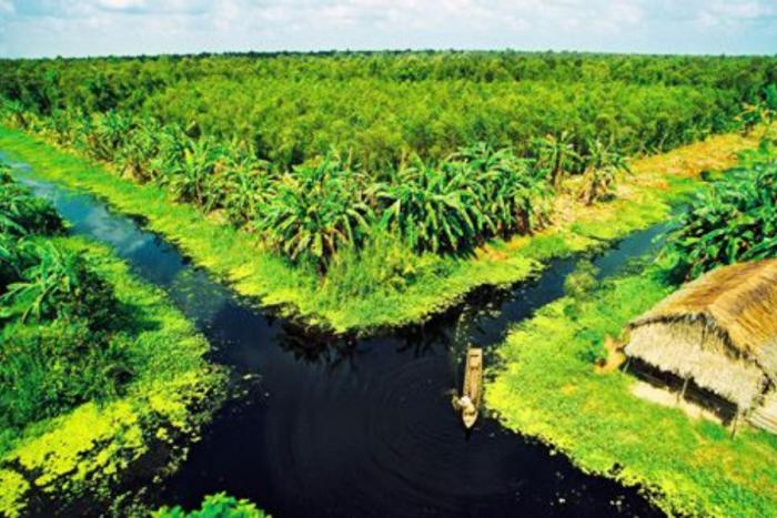 Vườn quốc gia U Minh Thượng - Du lịch Kiên Giang
