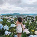 Du lịch Lâm Đồng vào tháng 10 để ngắm hoa cẩm tú cầu