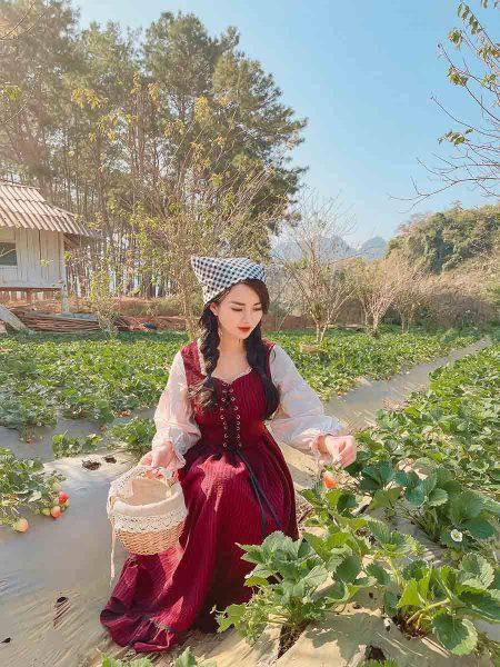 Trải nghiệm hái dâu tây - Du lịch Mộc Châu