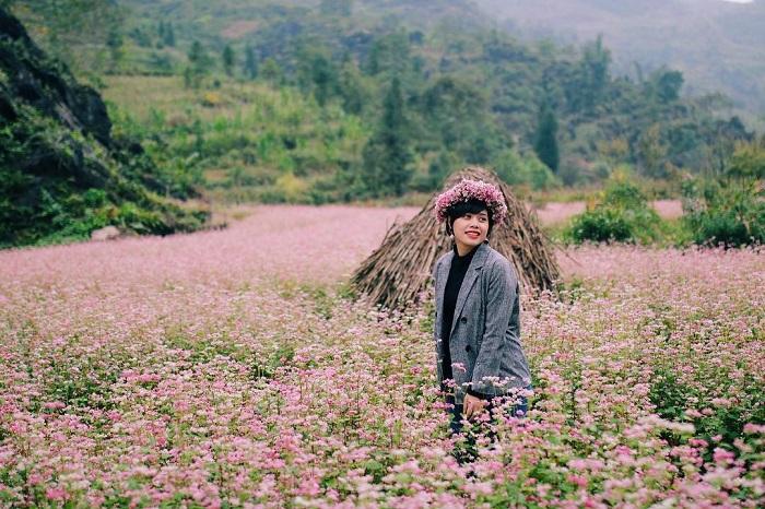 Tam giác mạch - Loài hoa đặc trưng của núi rừng - du lịch Mù Cang Chải
