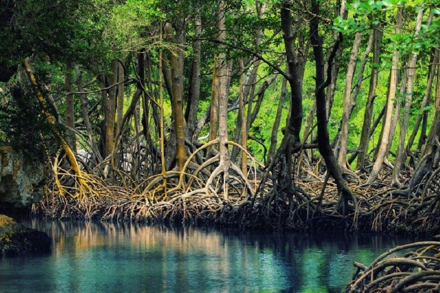 rừng đước ngập mặn