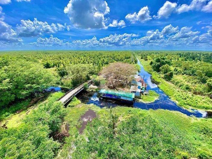 Toản cảnh rừng U Minh Hạ