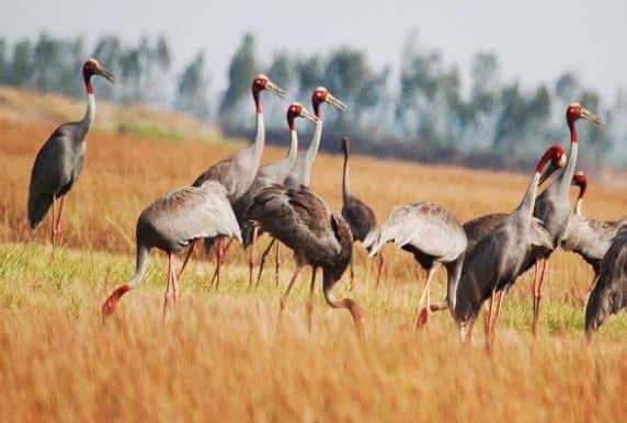 Vườn quốc gia Tràm chim tam nông - Du lịch Đồng Tháp