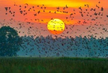 Vườn chim Cà Mau