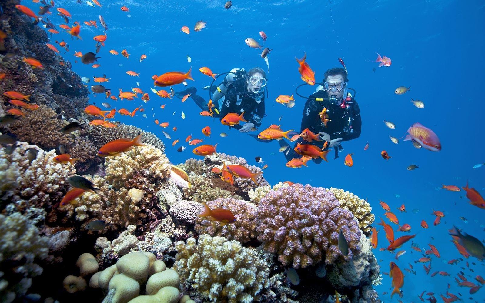Những hoạt động cần trải nghiệm tại bán đảo Sơn Trà