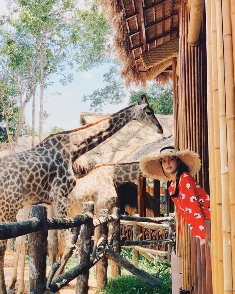 Trải nghiệm tại Vinpearl Safari Phú Quốc
