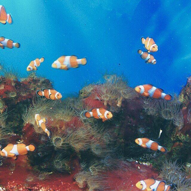 5 trải nghiệm không nên bỏ lỡ khi đến viện Hải dương học Nha Trang