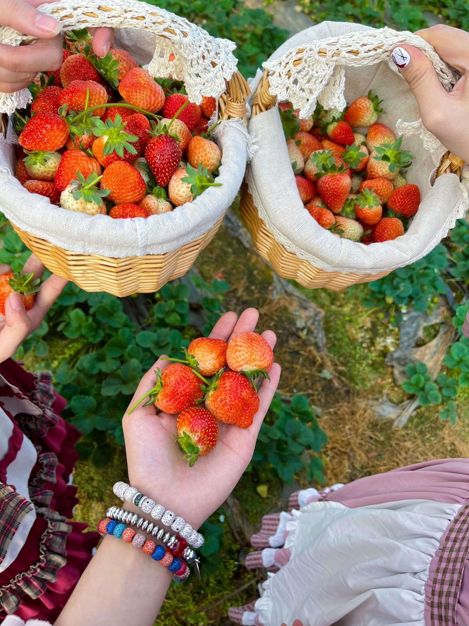 Những vườn dâu tây được giới trẻ yêu thích tại Đà Lạt