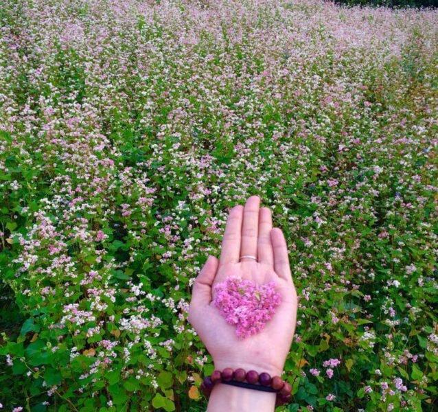 vuon hoa da lat 8 can duc