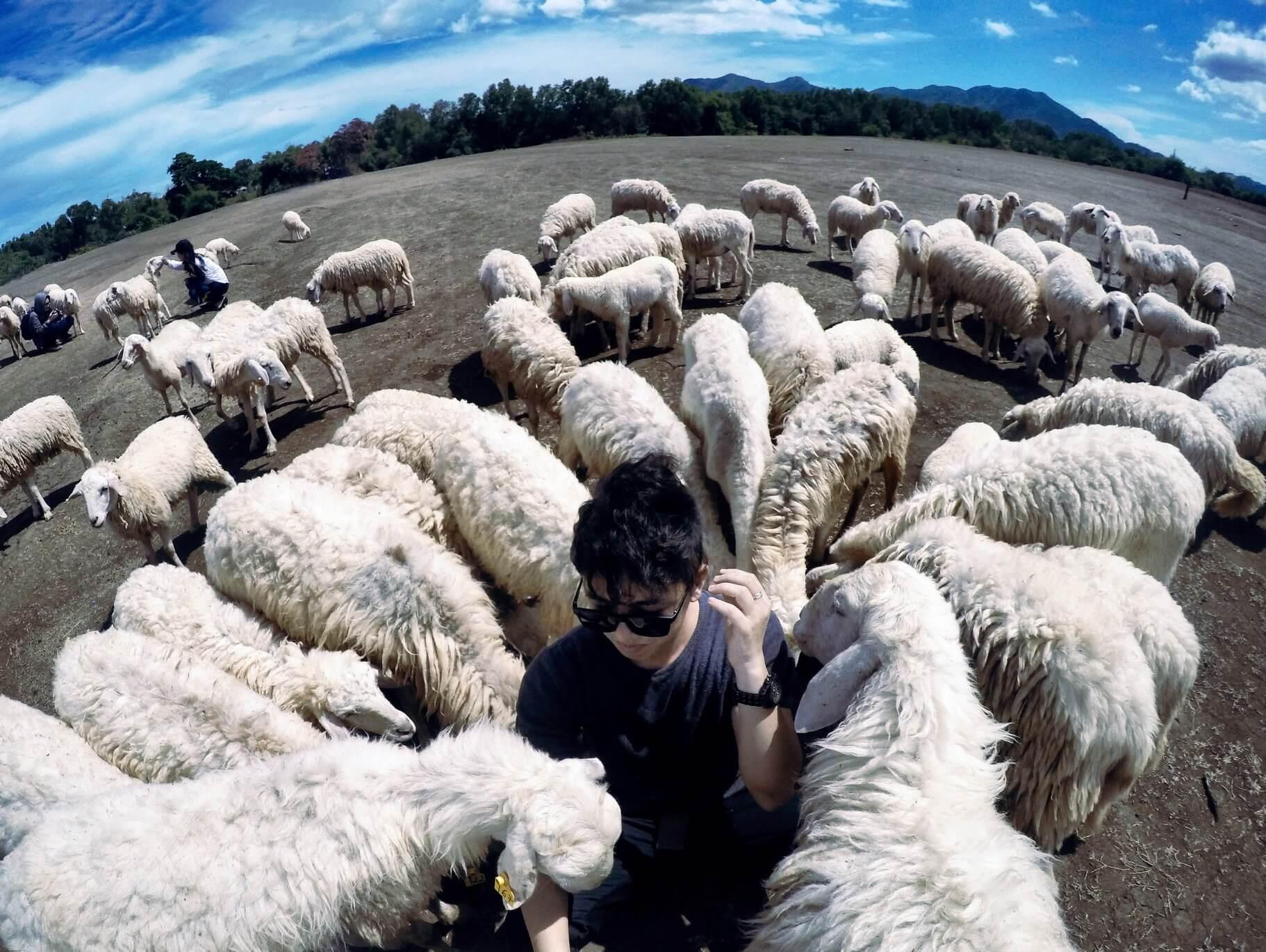Đồng cừu Suối Nghệ Vũng Tàu