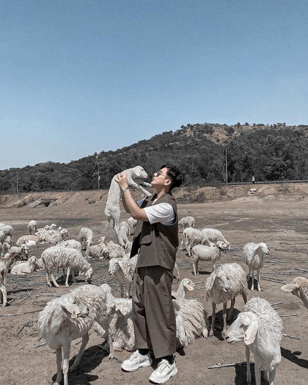 Giới thiệu về đồng cừu Suối Nghệ