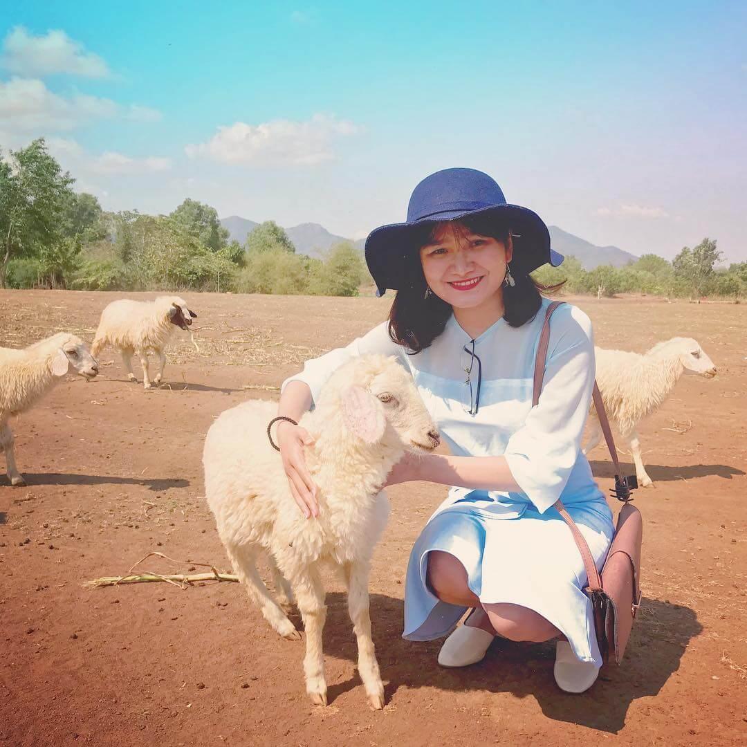 Giá vé tham quan đồng cừu SUối Nghệ
