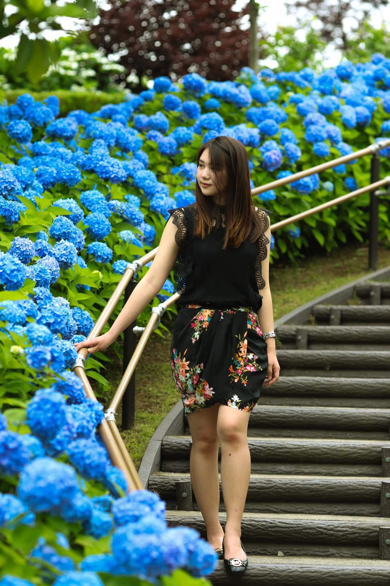 Vườn hoa cẩm tú cầu làng Đất Sét