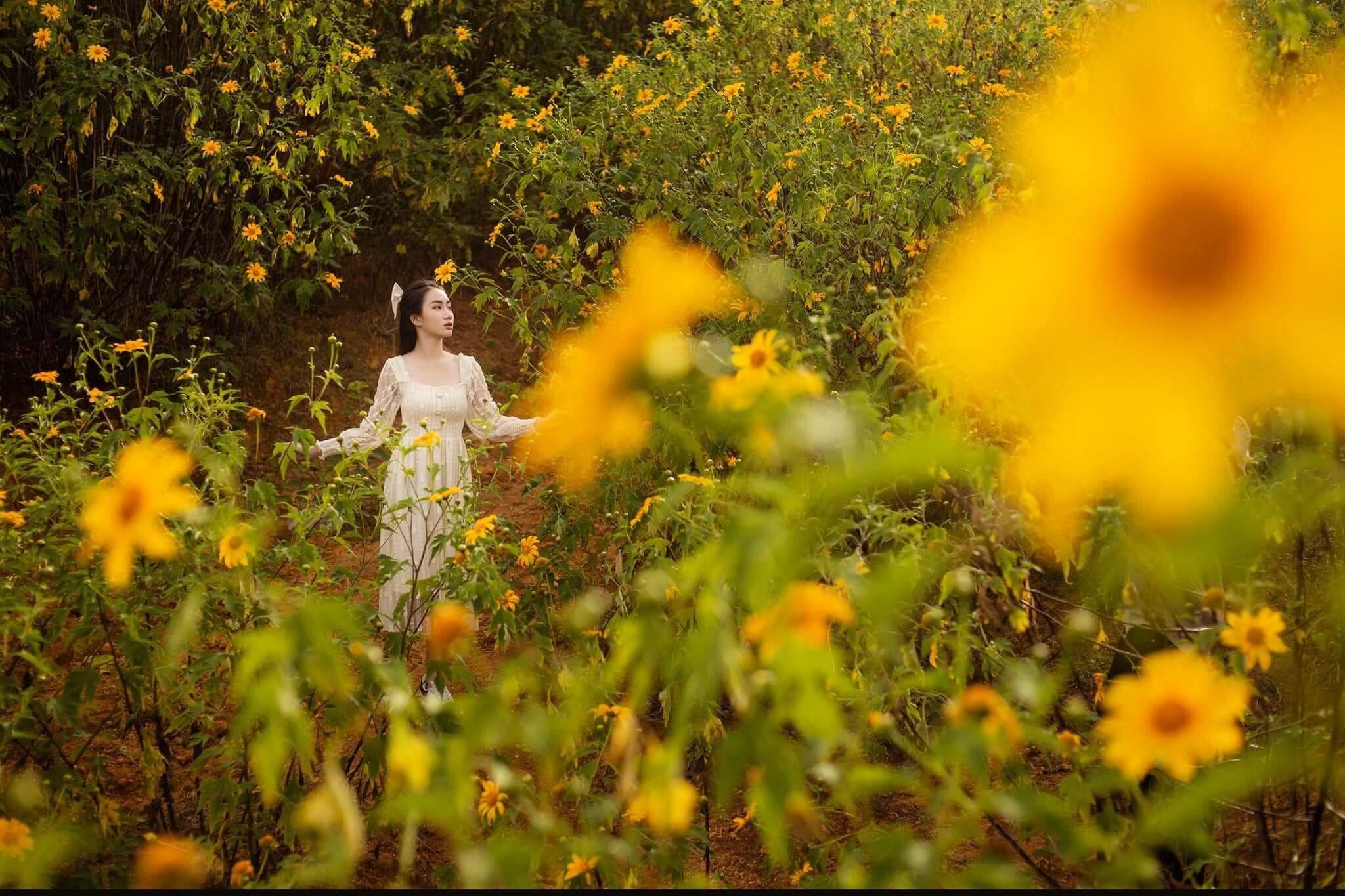 địa điểm ngắm hoa dã quỳ Đà Lạt