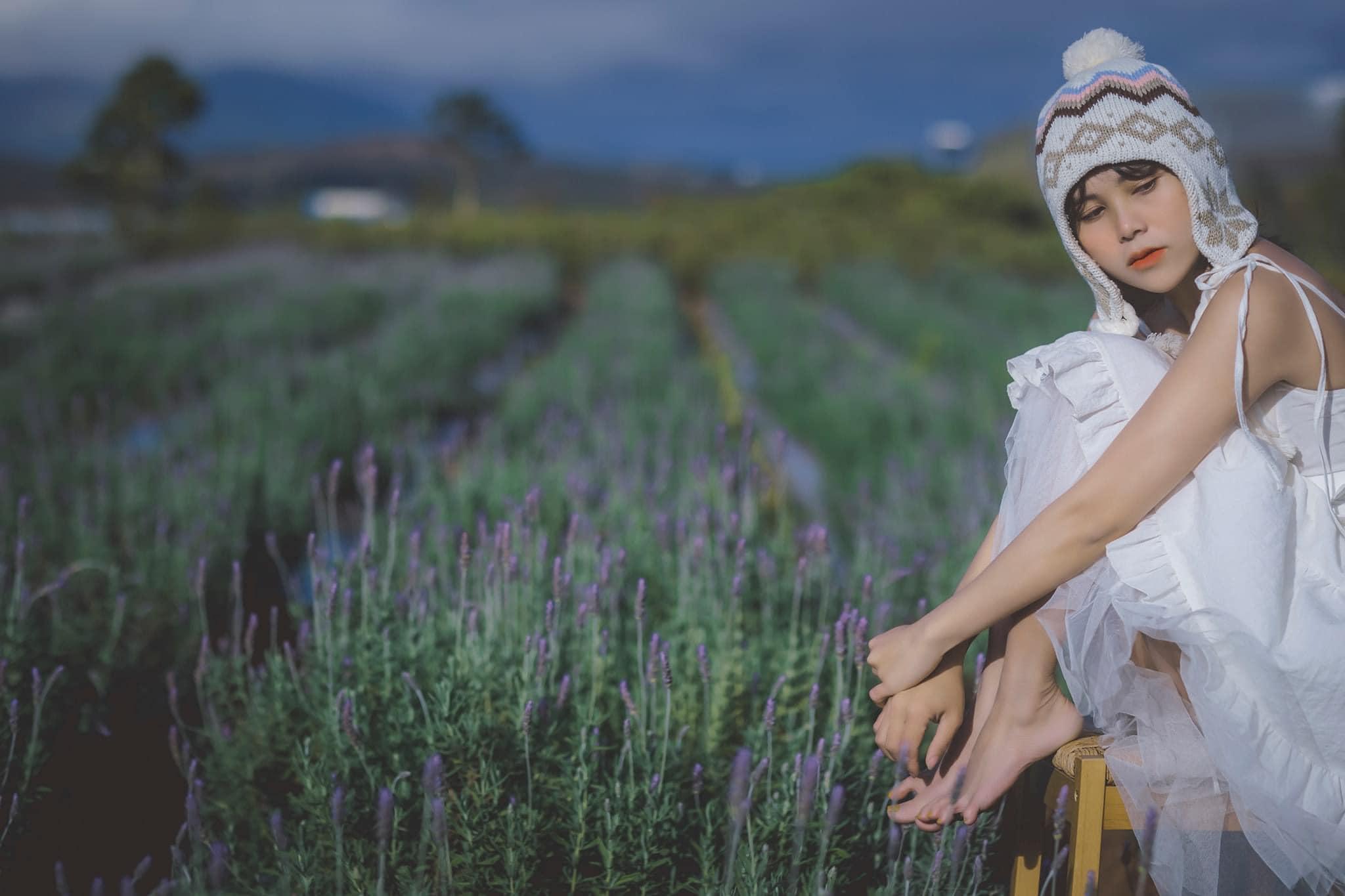 Vườn hoa Lavender Đà Lạt ở hồ Tuyền Lâm - hoa oải hương