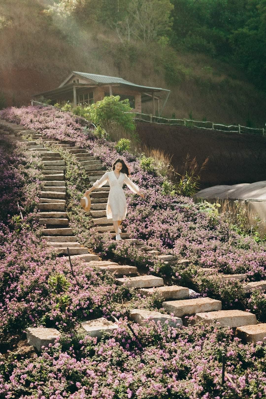 Vườn hoa lavender Đà Lạt - Túi Thương Nhớ
