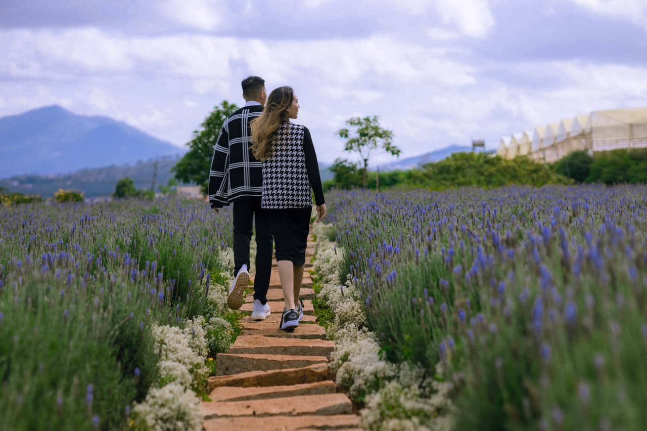 hoa lavender da lat 04